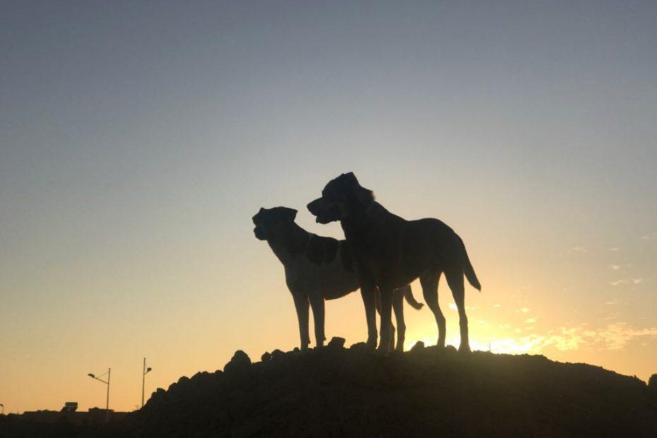 Pies w Maroku, jak się żyje psom w Maroku,