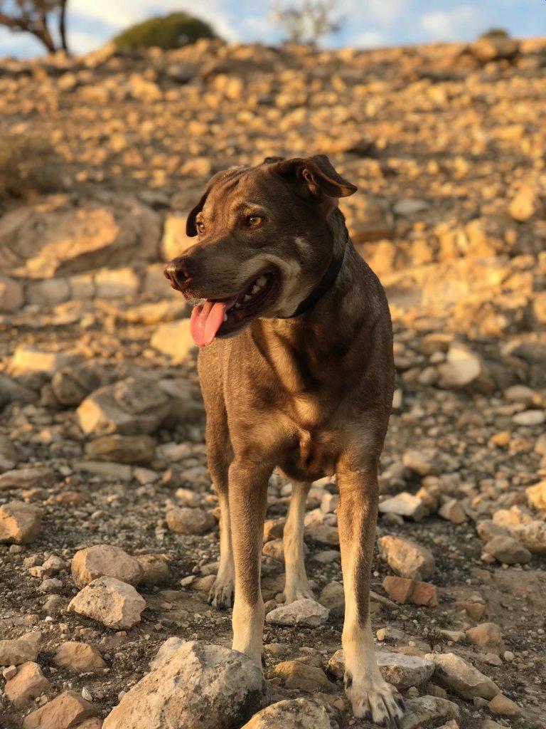 kochane psy w Maroku żyją na ulicy