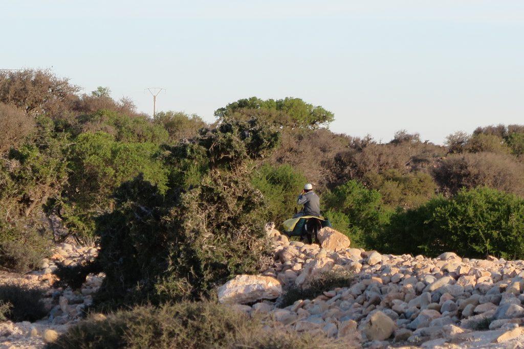 osły w Maroku