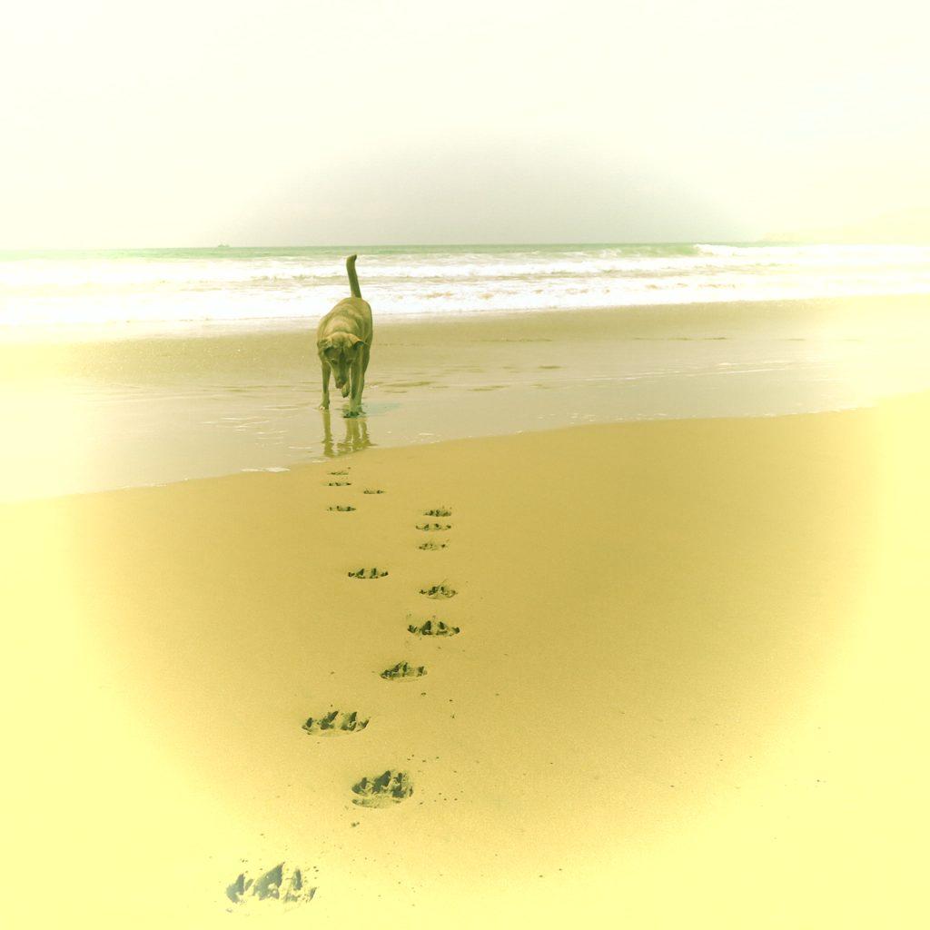 ocean-w-agadirze-026